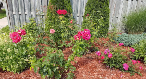 Three more team building lessons from gardening