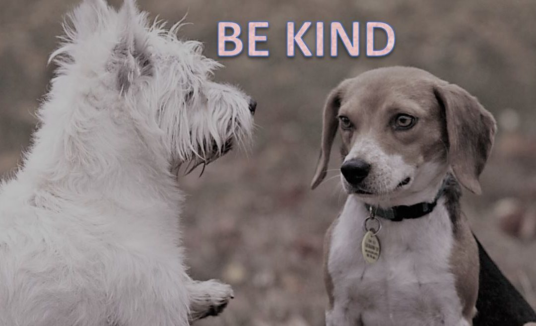 Psychological safety provides the foundation for a team culture of kindness